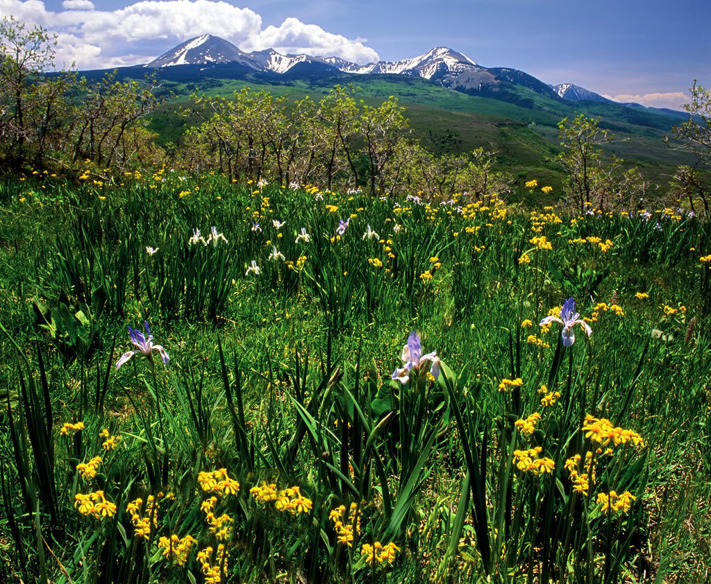 La_Sal_Mountain_Meadow.jpg nature and mountains image by raylights