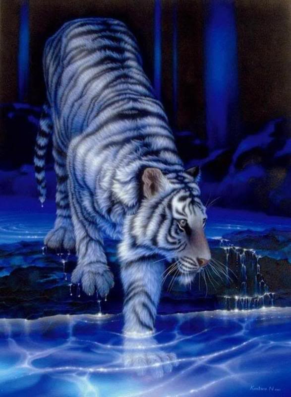 Amelia Ridmell White-tiger_art