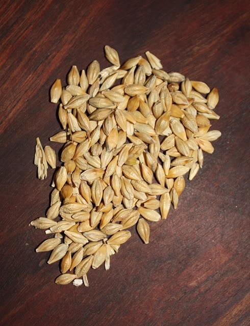 barley straw IMG_2436