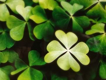 Meaning Of The Four-Leaf Clover Four-leaf-clover