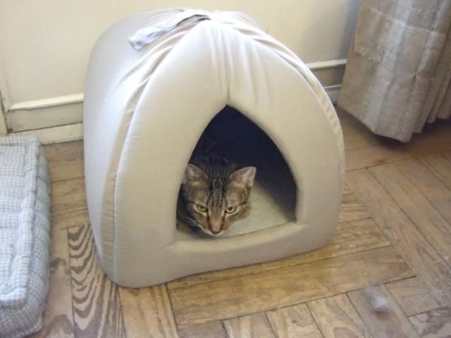 ¿Porque un gato enfermo? ¿de verdad crees que elegi un gato enfermo? 2009-07-2409Marenaeneliglunuevo