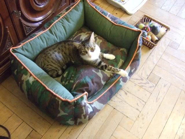 ¿Porque un gato enfermo? ¿de verdad crees que elegi un gato enfermo? 2009-07-2508Taro