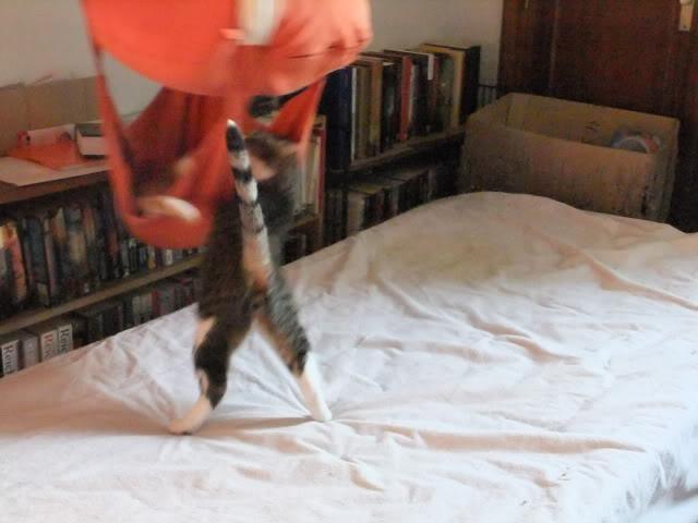 ¿Porque un gato enfermo? ¿de verdad crees que elegi un gato enfermo? 2011-04-170836