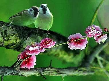Tajanstvenim stazama duse... - Page 4 Birds-2