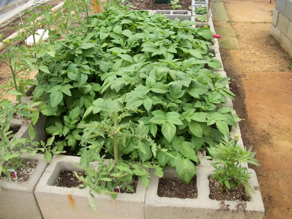 2011 Garden Pics - Page 2 100_0800-1