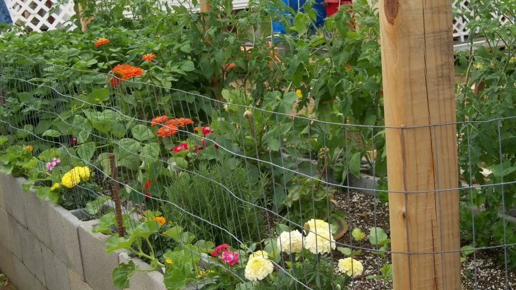 2011 Garden Pics - Page 2 100_0930