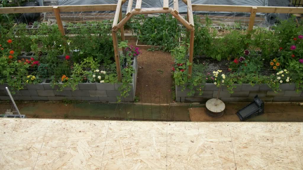 2011 Garden Pics 100_1050