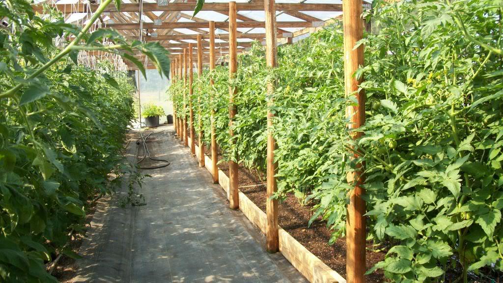 2011 Garden Pics 100_1100-1