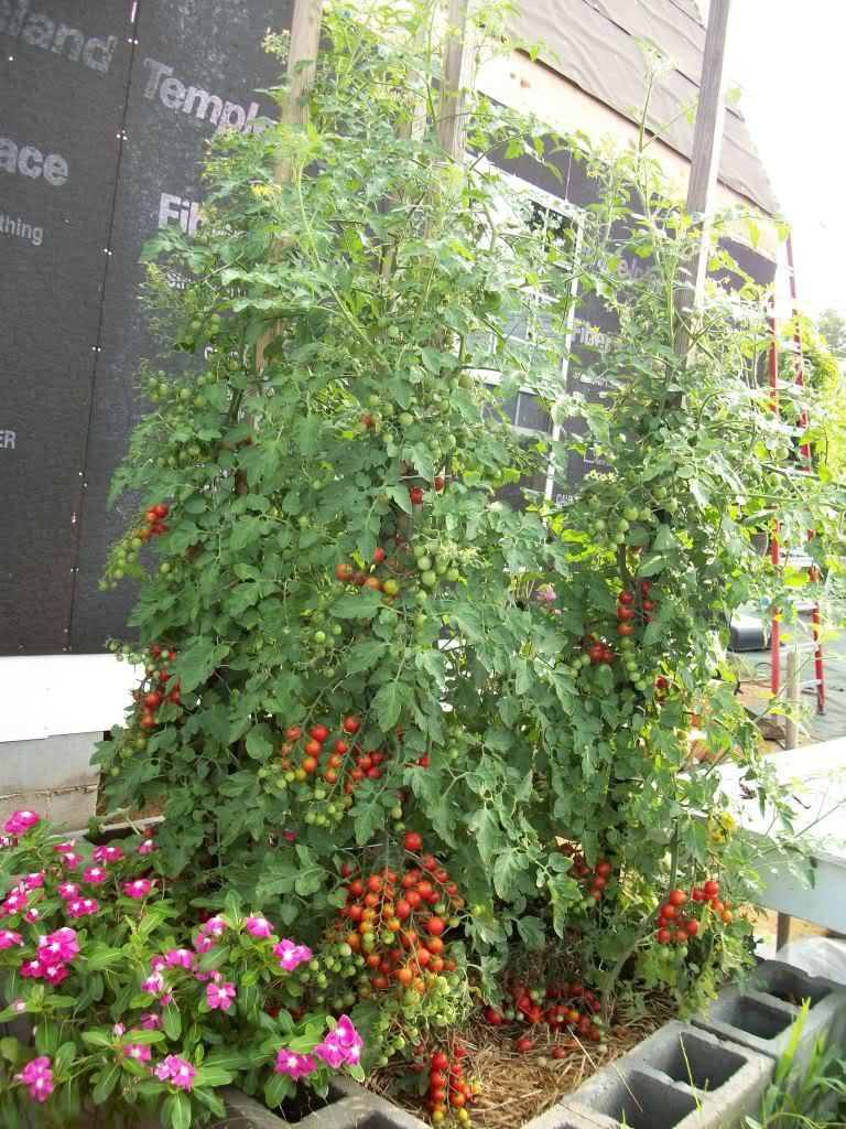 2011 Garden Pics 100_1218