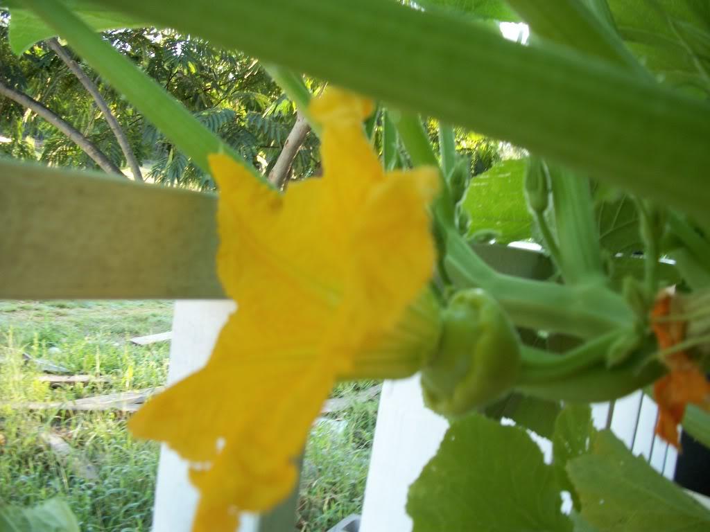2011 Garden Pics 100_1439