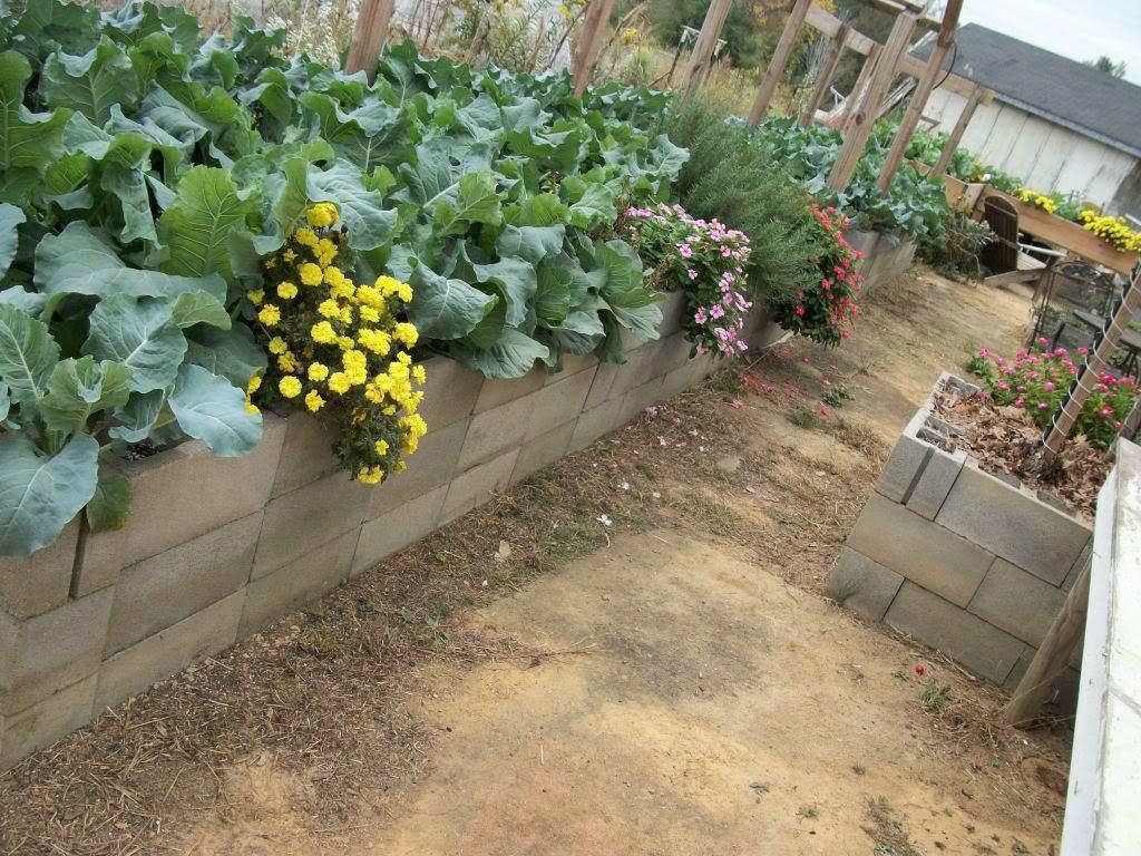 2011 Garden Pics 100_1560