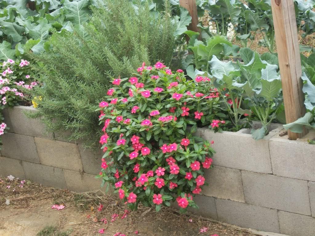 2011 Garden Pics 100_1567