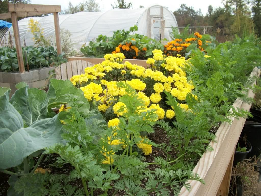 2011 Garden Pics 100_1570
