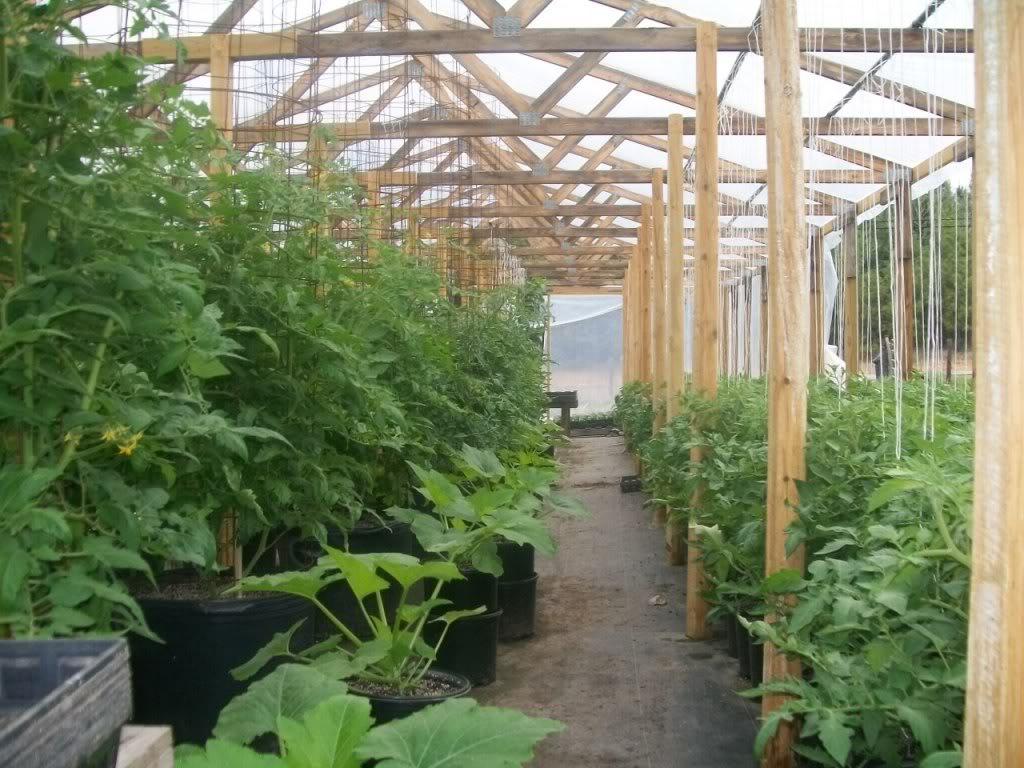 Tomato Produce Greenhouse SFG 102_1042