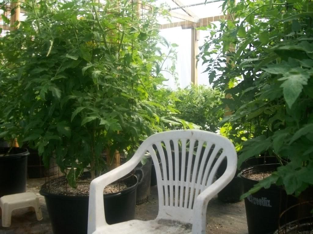 Tomato Produce Greenhouse SFG 102_1101