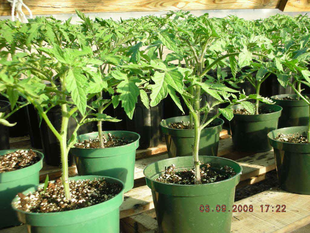 JAN/FEB 2011 VEGGIE ESSAY/ARTICLE CONTEST DSCN0724