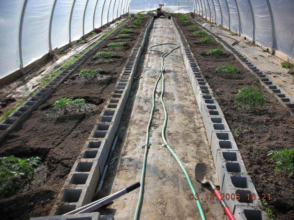 Tomato Produce Greenhouse SFG DSCN0761