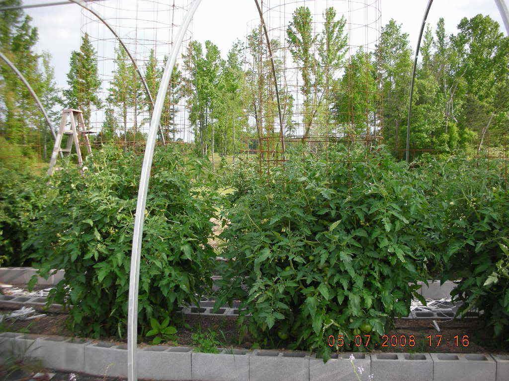 Tomato Produce Greenhouse SFG DSCN1149