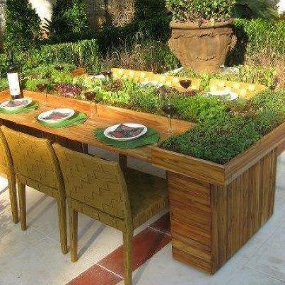 Perfect Table Top Garden RealTableTopGarden_zps6af1e5ed