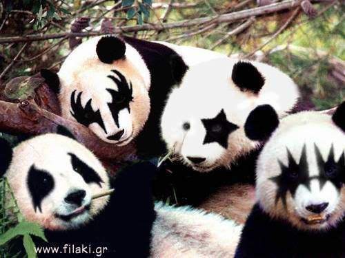 Random Funny Pictures Thread:) Panda
