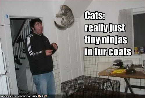 Post LOLcats here - Page 2 Funny-pictures-cats-are-tiny-ninjas