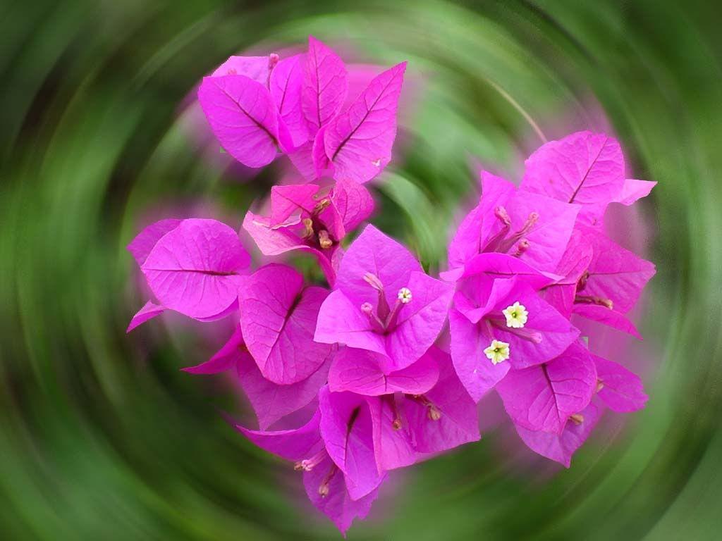 நான் ரசித்த மலர்கள் சில... - Page 6 Flower