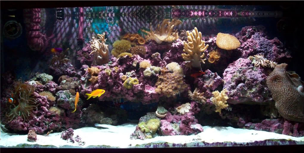 75g softie reef 100_2338