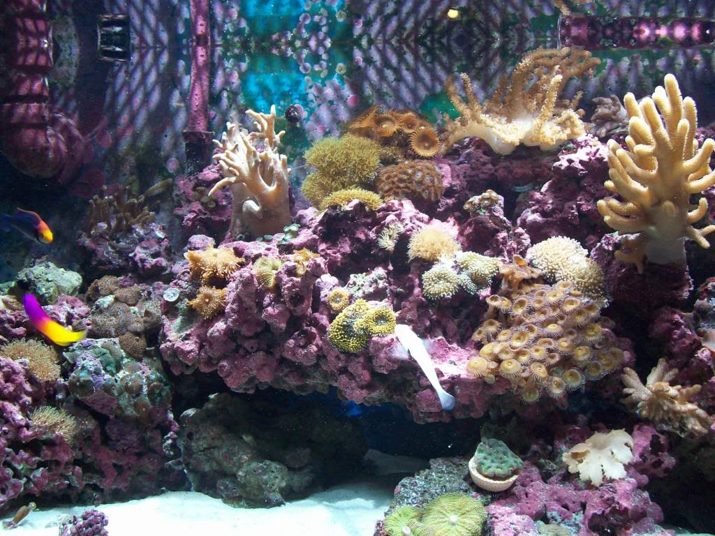 75g softie reef 100_2342