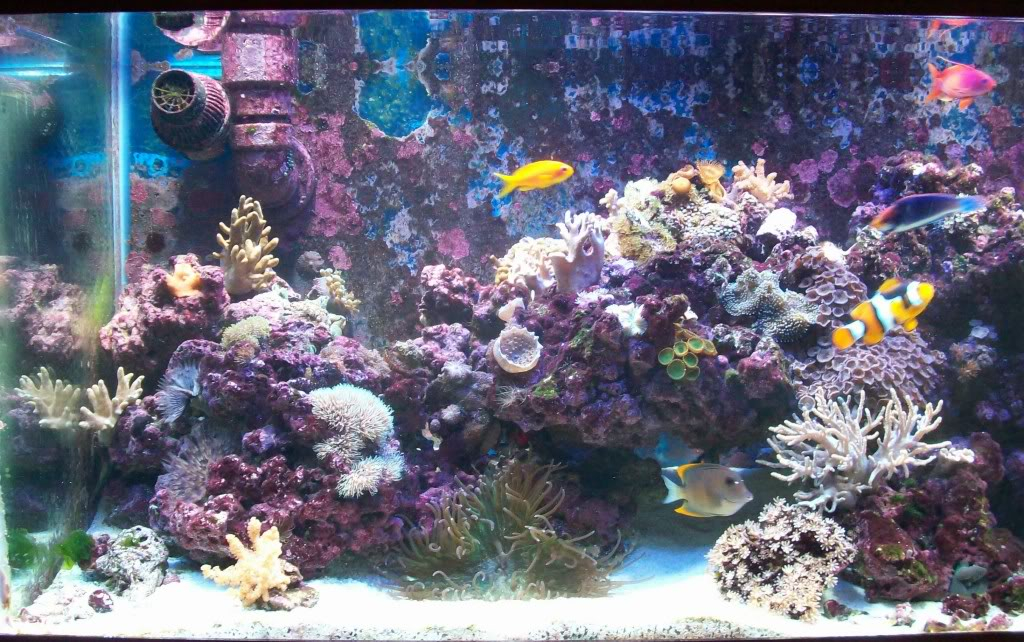 75g softie reef 100_2485