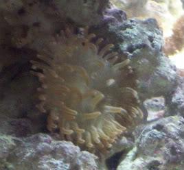 Anemone Pictures Lta2-02-08-1