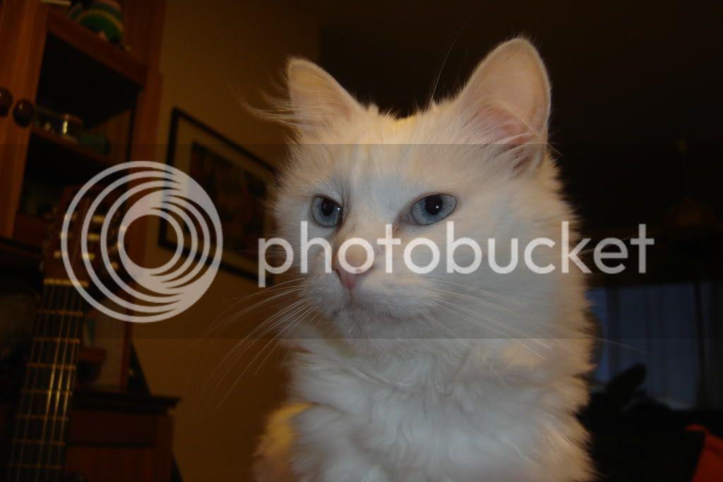 4 pics ( portraits ) !! Basile, Clochette, kimy DSC08307