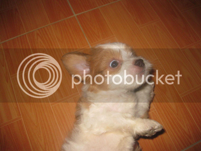Con chó, mới nuôi ! IMG_4436