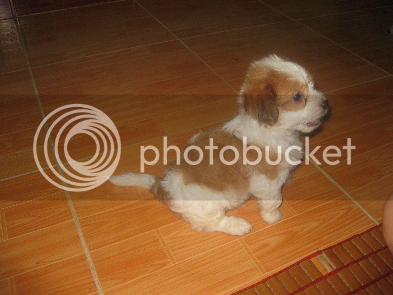 Con chó, mới nuôi ! IMG_4441