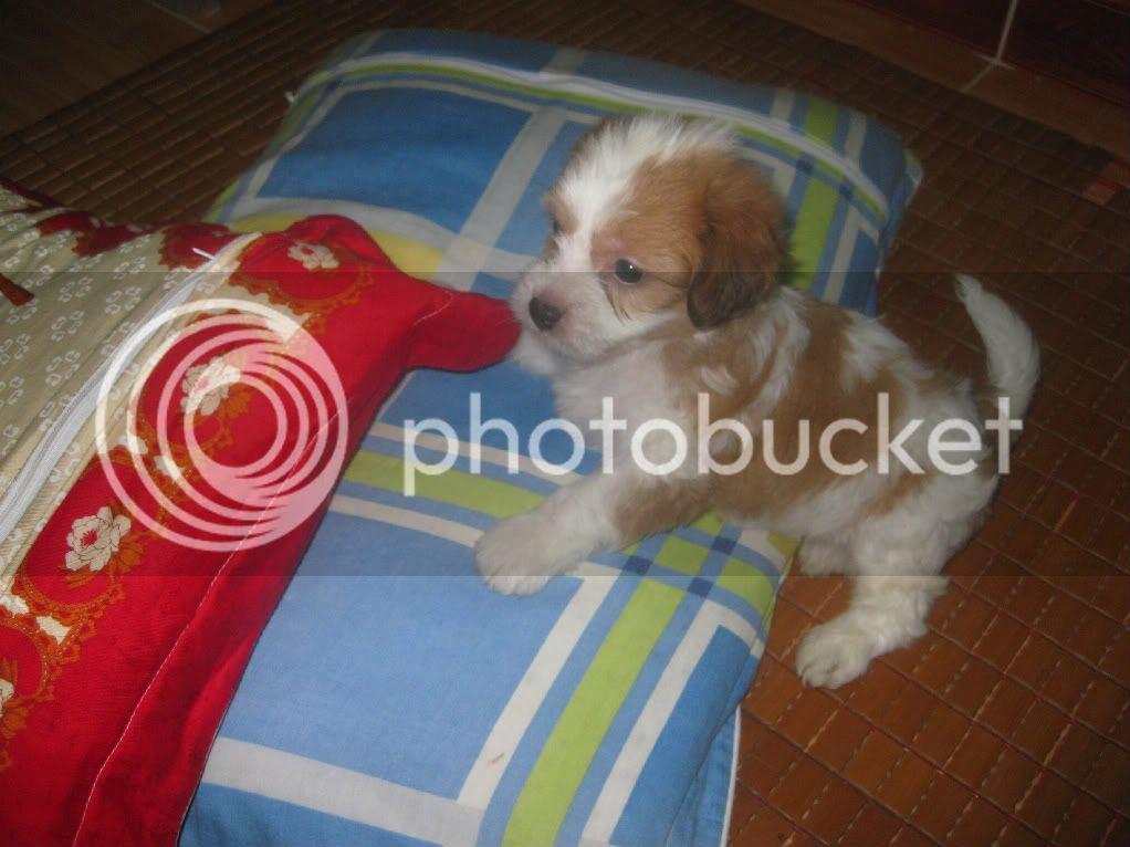 Con chó, mới nuôi ! IMG_4442-1