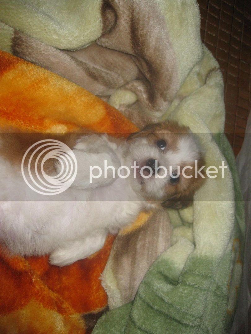Con chó, mới nuôi ! IMG_4446
