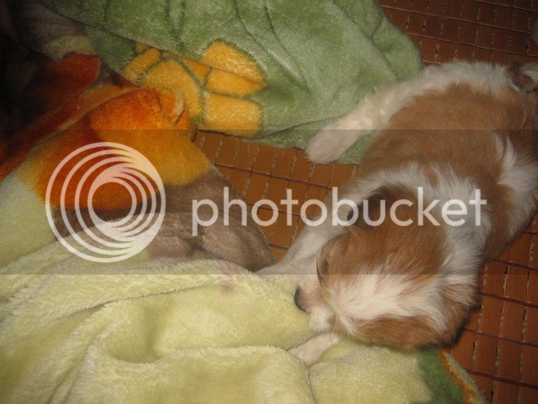 Con chó, mới nuôi ! IMG_4447