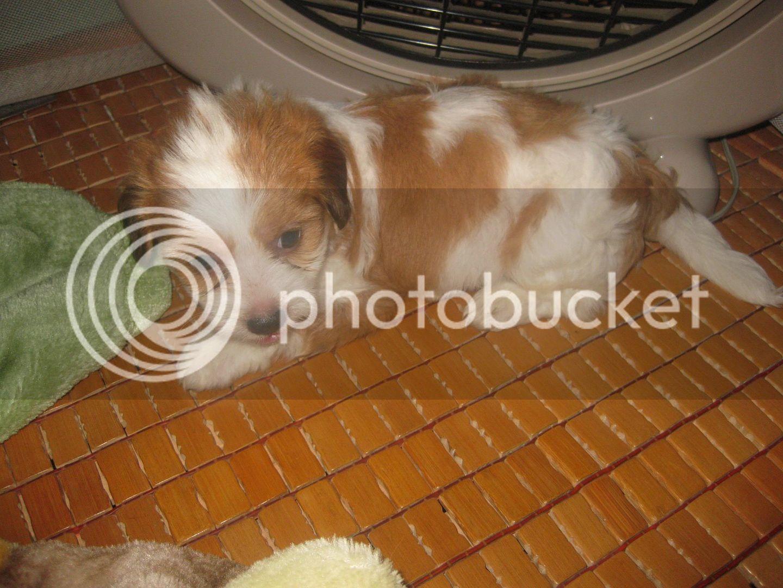 Con chó, mới nuôi ! IMG_4453