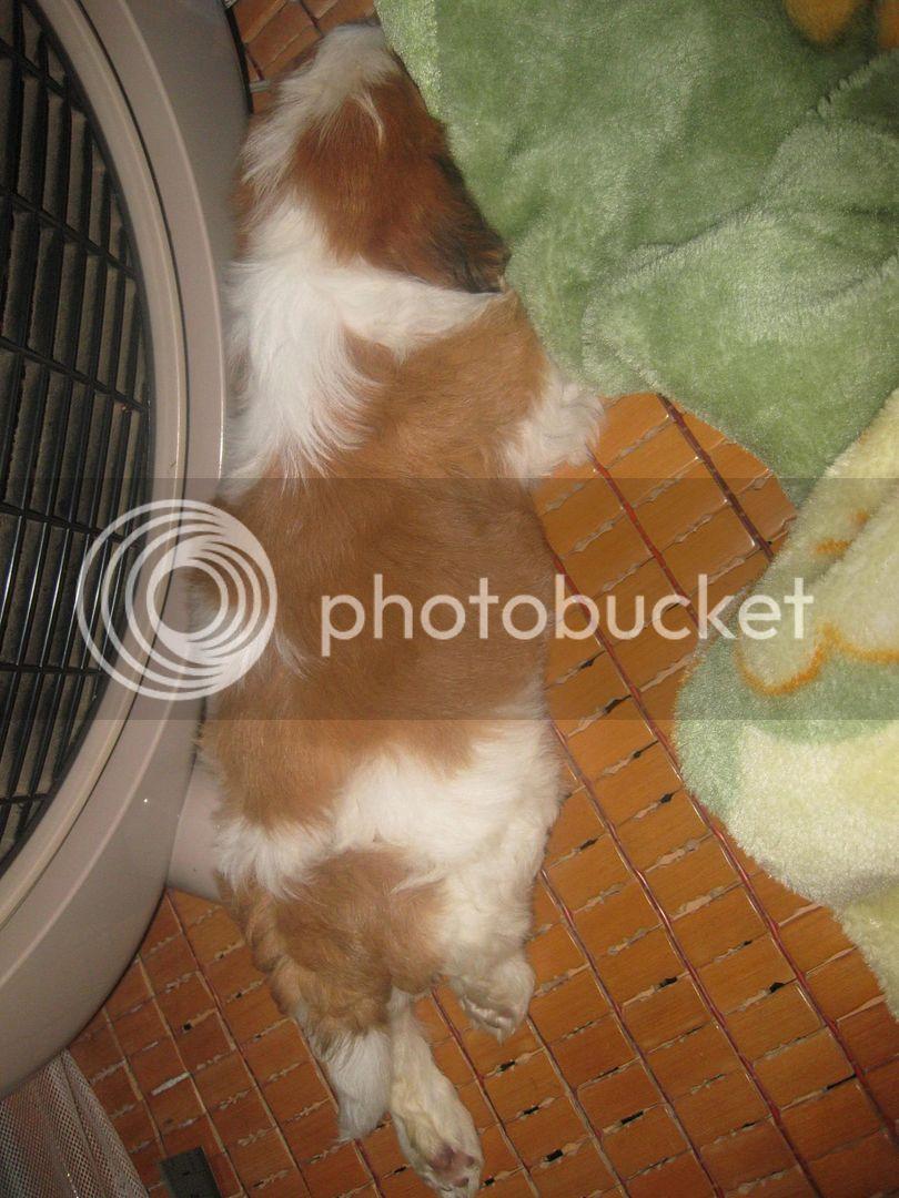 Con chó, mới nuôi ! IMG_4460