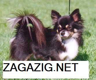 صور الكلاب وأنواعها بالأسامى , صور كلاب 10-9