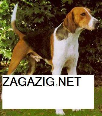 صور الكلاب وأنواعها بالأسامى , صور كلاب 12-6