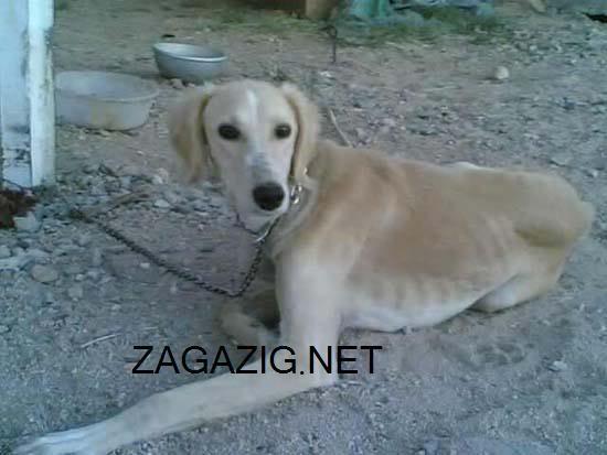 صور الكلاب وأنواعها بالأسامى , صور كلاب 2-28