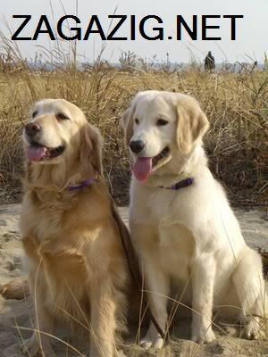 صور الكلاب وأنواعها بالأسامى , صور كلاب 6-17
