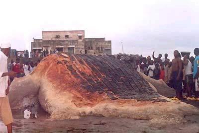 qUái vẬt bIỂn mẮc cẠn Ở Guinea Hellish1