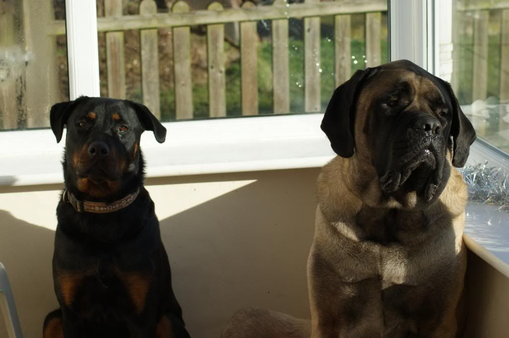Bella - Rotti - HOMED - Page 2 219_zps59a85a55