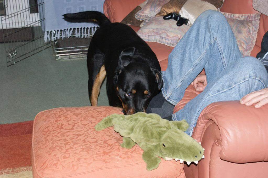 Bella - Rotti - HOMED Bella004_zps27de69b1