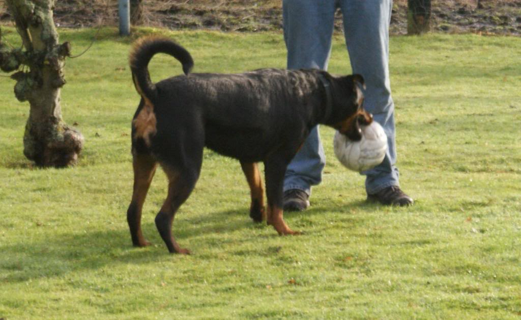 Bella - Rotti - HOMED Bella022_zpsd4f1804d