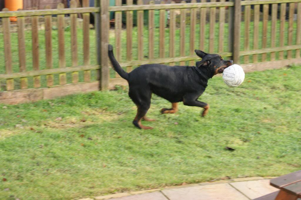 Bella - Rotti - HOMED Bella035_zps3a9126cc