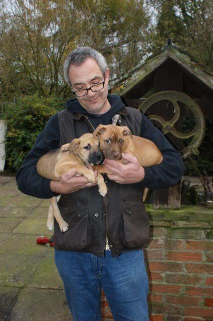 2 pups - HOMED 018_zps9828178f