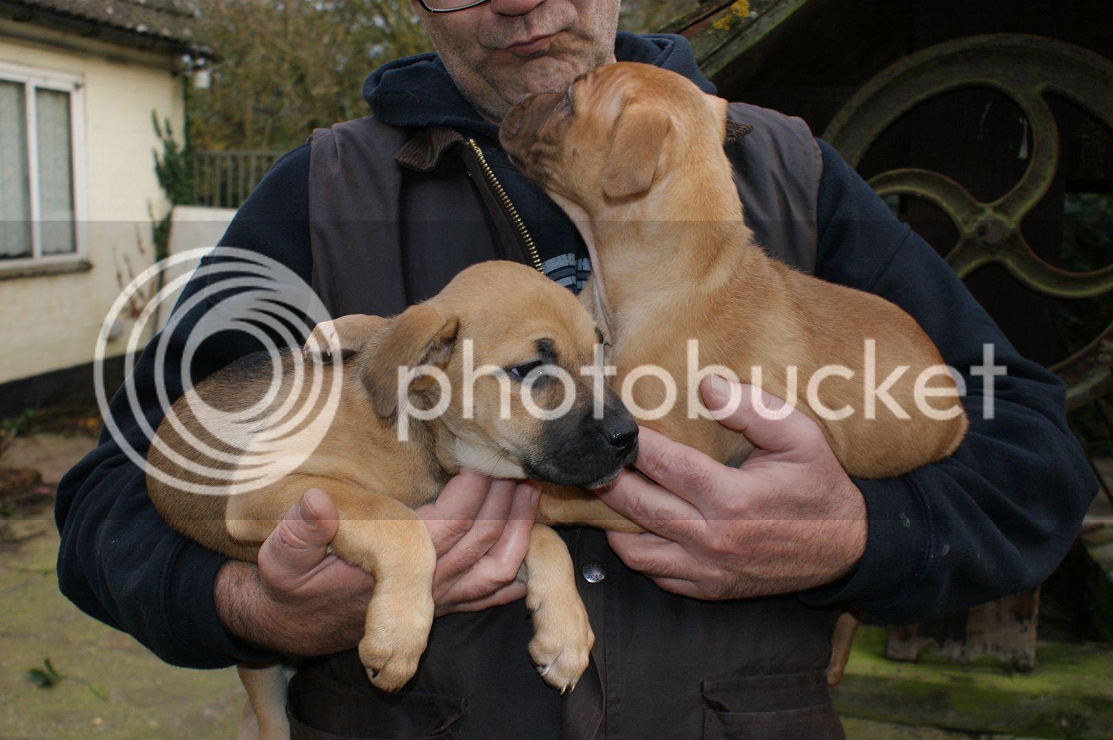 2 pups - HOMED 019_zpscb8401fb