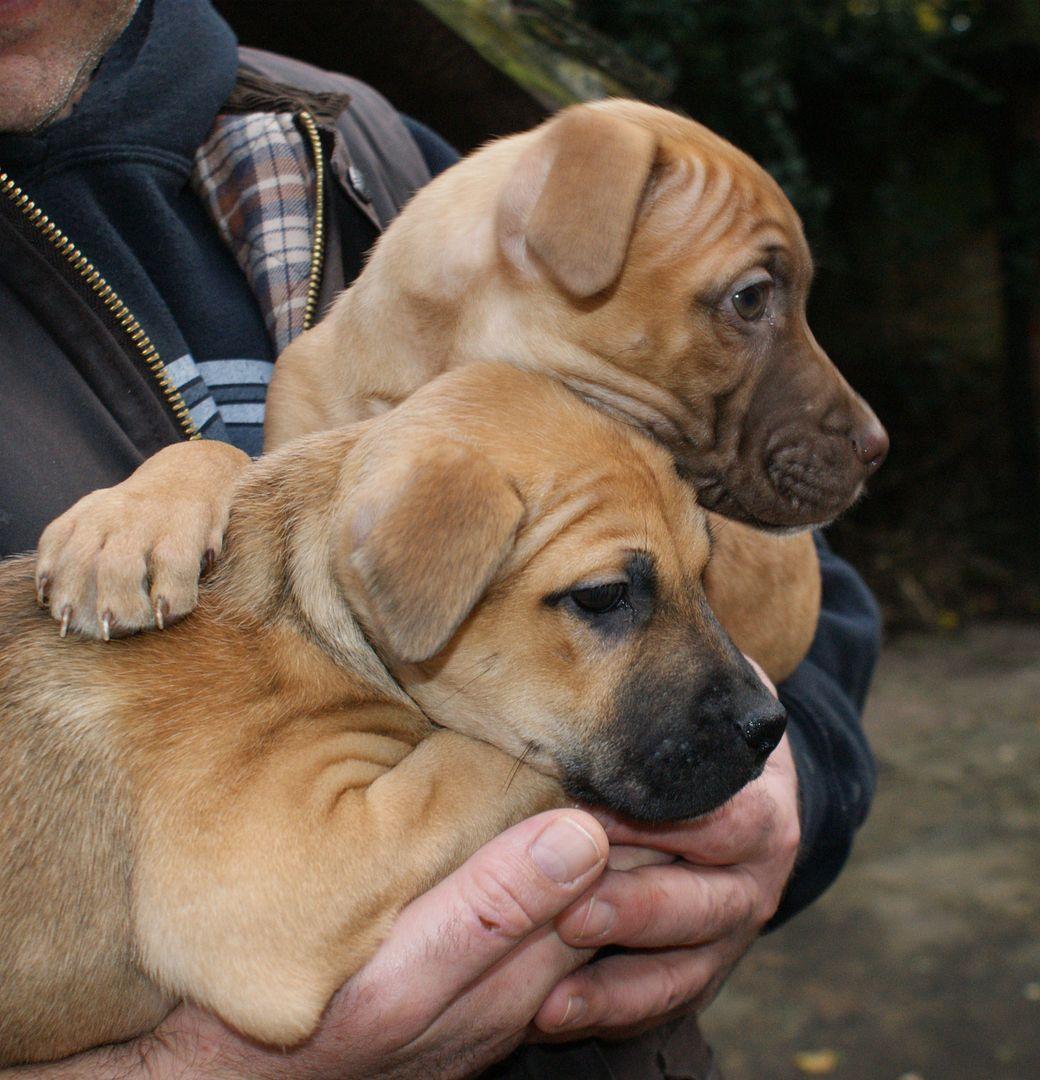 2 pups - HOMED 026_zps2ba1cc10